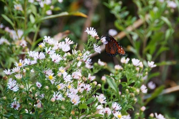 Butterfly1 008