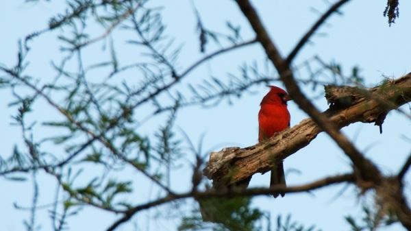 CardinalCorkscrew