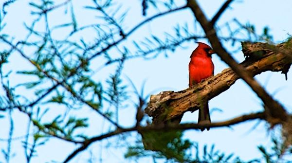 CardinalFixed