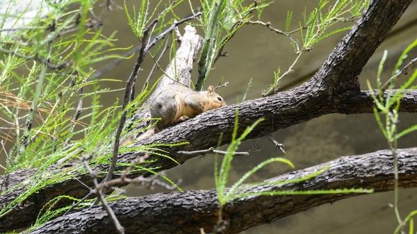 AustinSquirrel