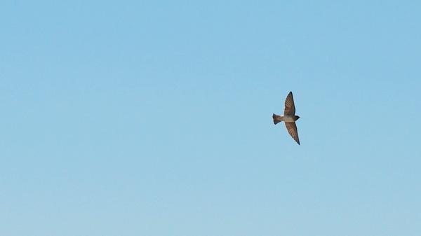 HagermanNWRCliffSwallow