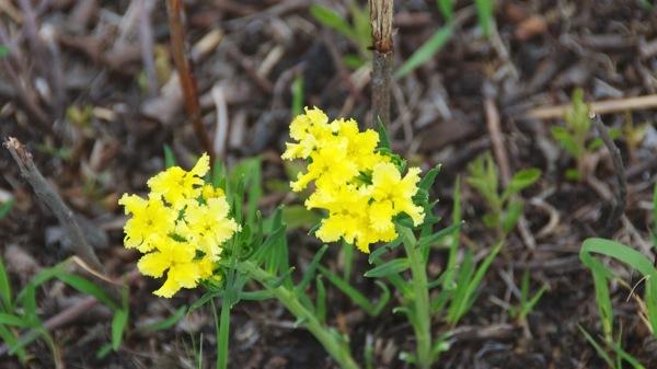 KonzaPrairieWildflowers