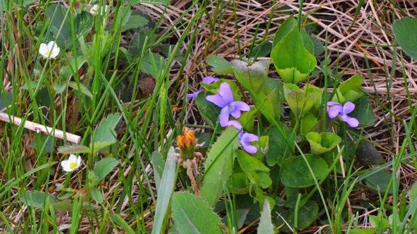 EdmontonWildflowers