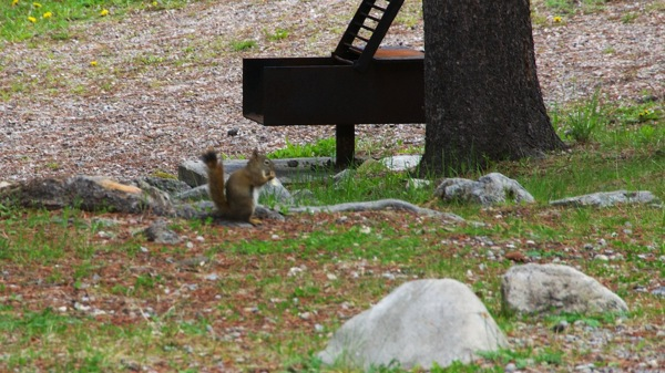 JasperNPMeitteRedSquirrel