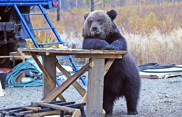 Whats a Bear Gotta Do for a Beer