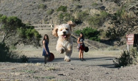Attack of the Giant Dog