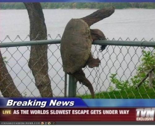 TurtlesClimbLikeABoss