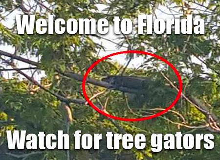 Tree Gators