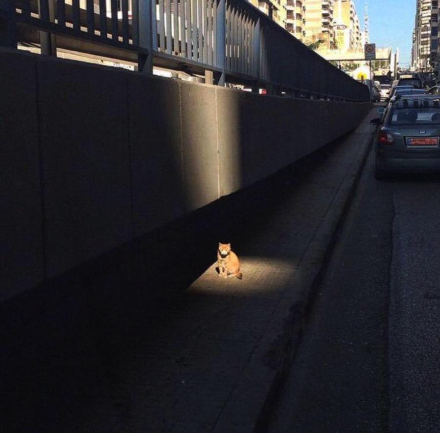 CatSideQuest
