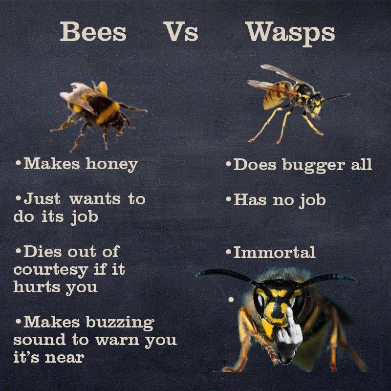 BeesVsWasps