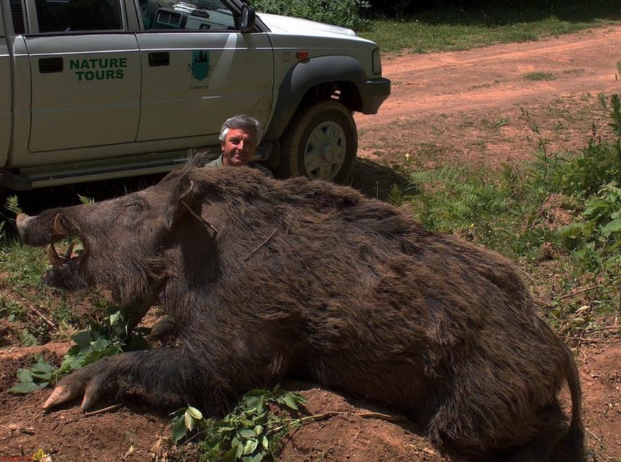 SeriouslyBig Hog
