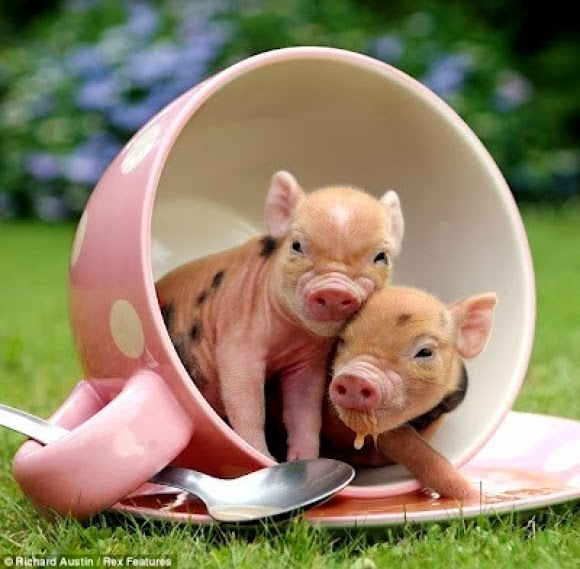 BaconSeed2
