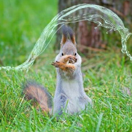 WaterBendingSquirrel