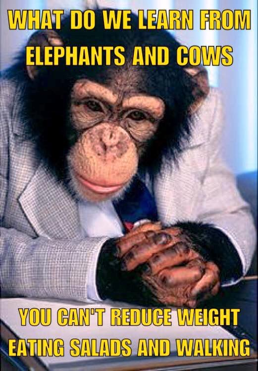 ElephantsAndCows