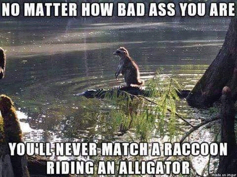 BadAssRaccoon