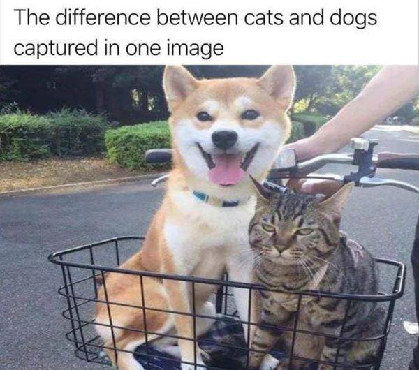 CatsVsDogs