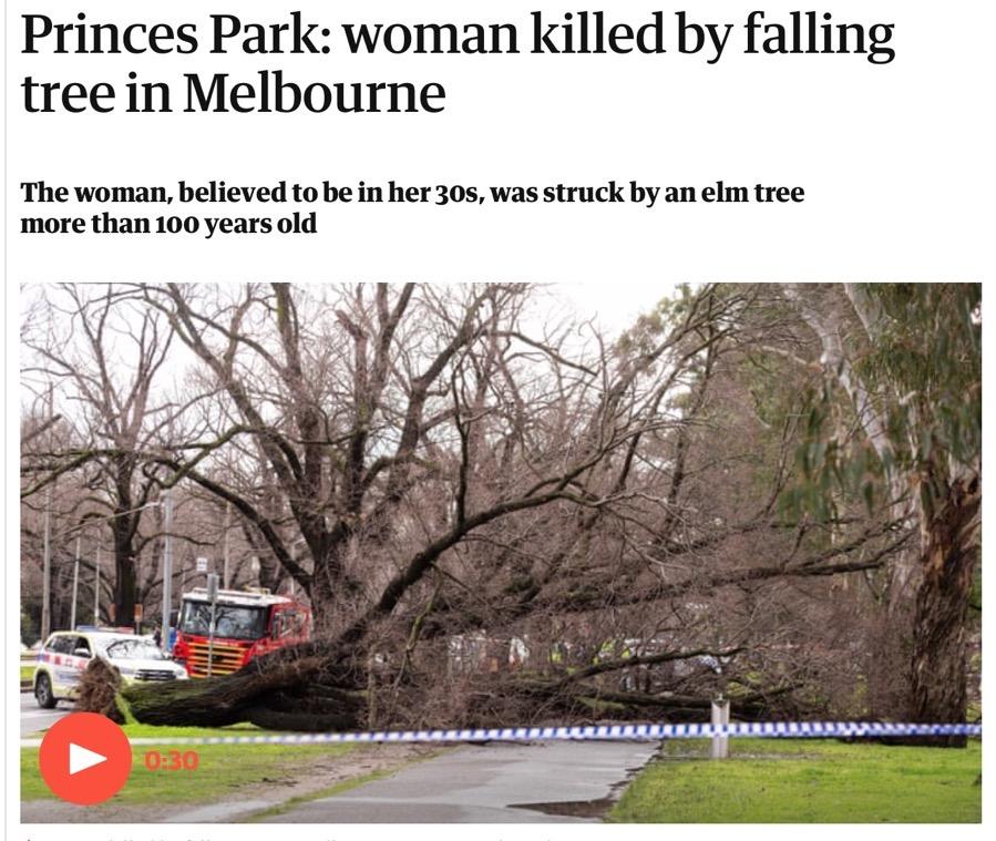 TreesWantToKillYou