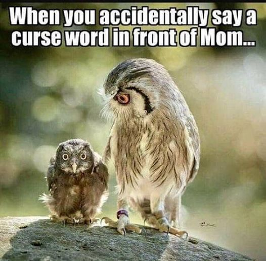 CurseWordMom