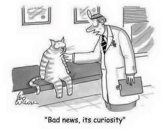 CuriosityCat