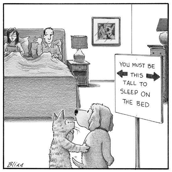 PetsSleepingOnBed