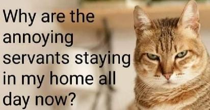 CatComplaint
