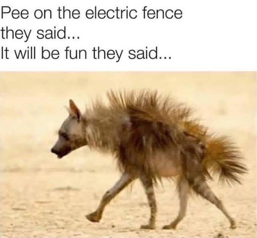 PeeOnElectricFence