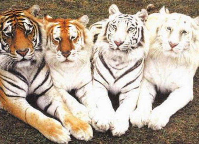 TigerPrinterLowOnInk