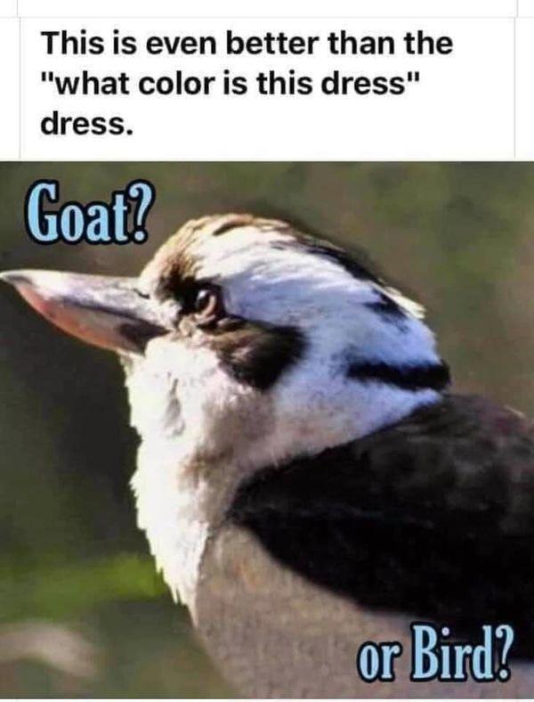 GoatOrBird