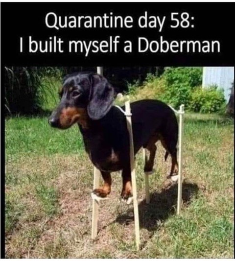 BuiltMyselfADoberman