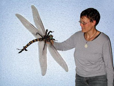 CarboniferousDragonfly