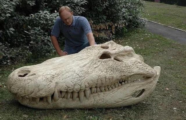 GiantMioceneCayman